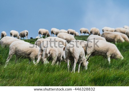 A flock of sheep against a grey sky.