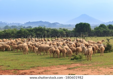 A flock of sheep grazes on a green field - stock photo