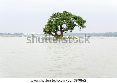 A flooded green tree at dhaka , bangladesh - stock photo