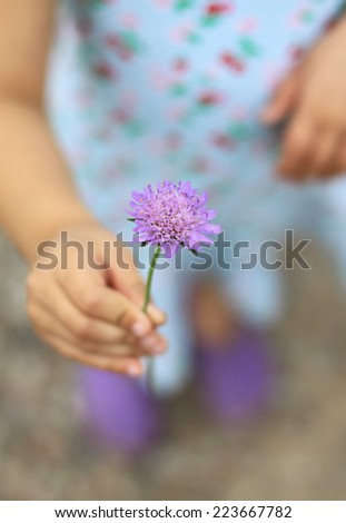 A flower in the hands of a girl - stock photo