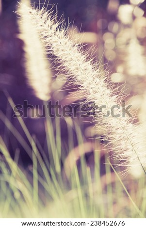 A flower of weed grass with sun light  - stock photo