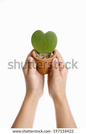 A Flower Pot On The Hand Of A Child - stock photo