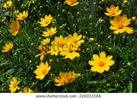 A flower, sometimes known as a bloom or blossom, is the reproductive structure found in flowering plants - stock photo
