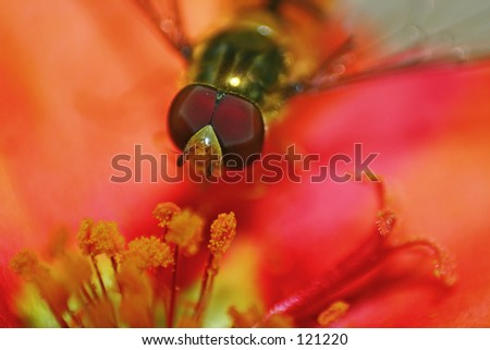 A flying bee on a colorfull flower. - stock photo