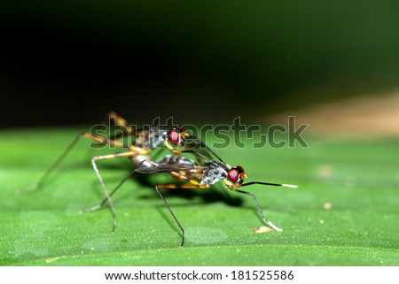 A flys insect mating
