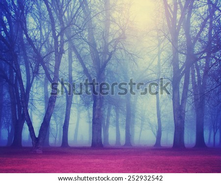 a foggy forest during fall toned with a retro vintage instagram  - stock photo