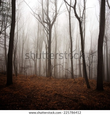 A foggy mist covering a forest of trees. - stock photo