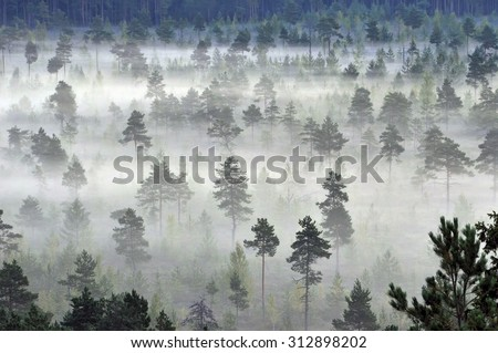 A foggy morning in a forest. - stock photo