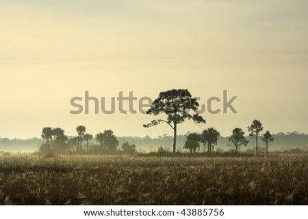 A Foggy Morning in Big Cypress, South Florida - stock photo