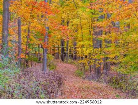 A footpath in a local park in during the fall season. - stock photo