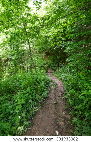 A footpath through the forest on a summer day - stock photo
