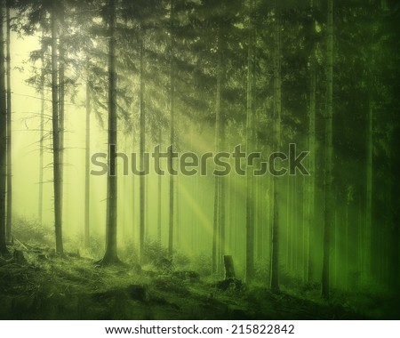 A forest background with yellow and green light rays coming through the trees.