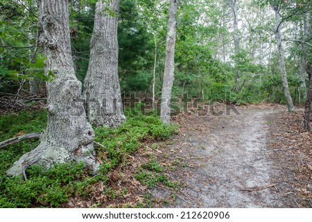A forest growing on Cape Cod, Massachusetts is dominated by oak and pine trees. The soil on the Cape is quite sandy and thus certain trees do particularly well. - stock photo