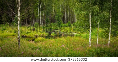 a forest swamp in spring - stock photo