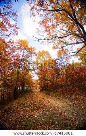 A forest trail in the fall with colorful trees. - stock photo