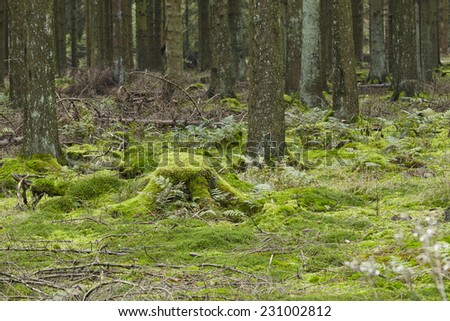 A forest with trees and a moss-covered stub taken at diffused light.