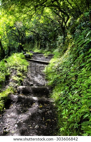 A four-mile wet, muddy trail down a tropical Hawaiian mountain on Molokai leads to a small town of only a handful of residents and is the only access other than by sea. - stock photo
