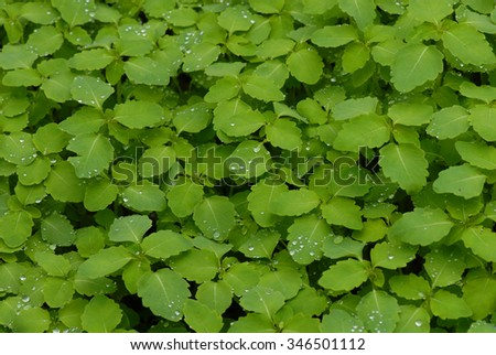 A frame filled with fresh green foliage after a rain storm. - stock photo