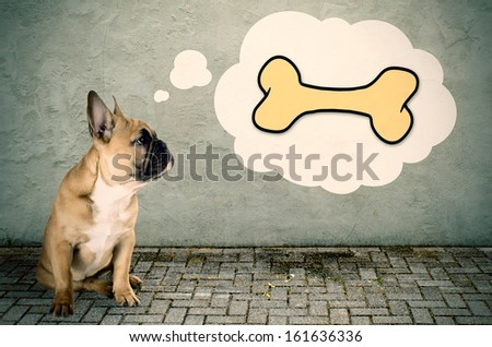 a French bulldog with a bubble of thought to a bone - stock photo