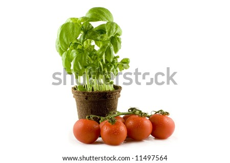 A fresh basil plant and some nice red tomatos isolated on white background - stock photo