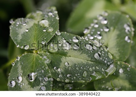 a Fresh green  grass with dew drops close up