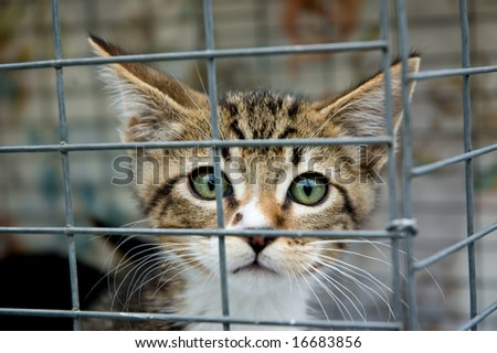A frightened kitten with green eyes staring out from a cage