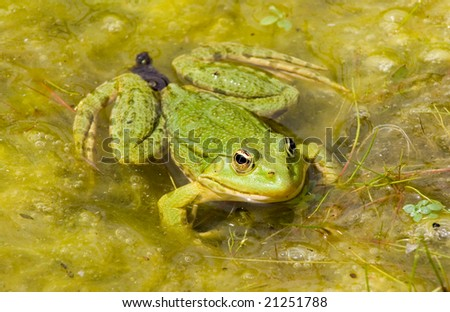 a frog - stock photo