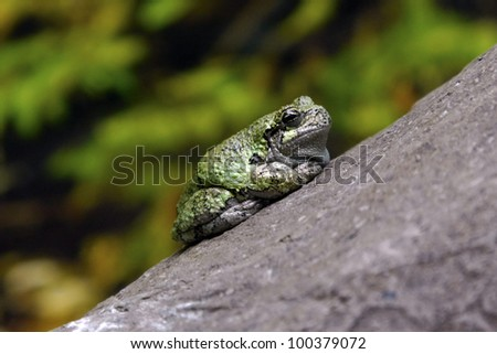 A frog on trunk