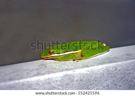 A frog sitting on a piece of wood.