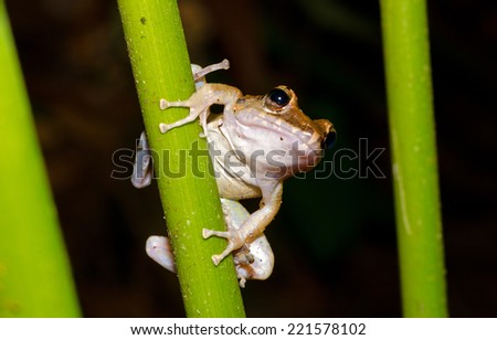 A frog waits onto a small branch for a meal to fly past - stock photo