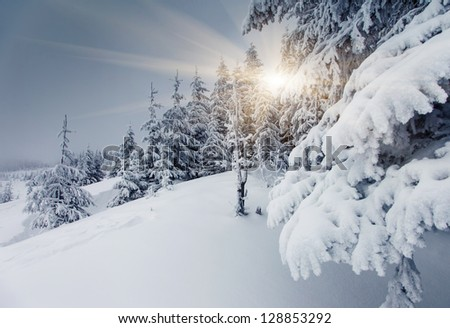 A frosty and sunny day is in mountains. Carpathian, Ukraine. - stock photo