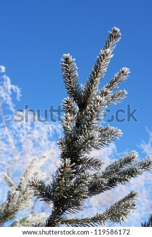 a frosty branch in snowy winter landscape - stock photo