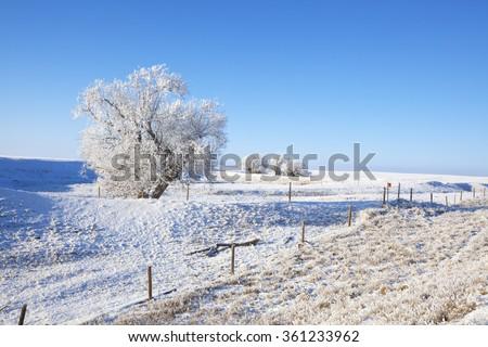 A frosty Southern Alberta prairie landscape in winter. - stock photo