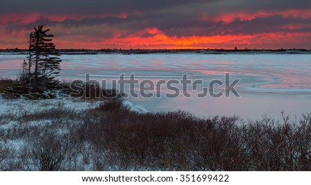 a frozen lake on the arctic tundra. Dwarf willows line the shore, and sunrise light colors the clouds. A wind-blown tree emphasizes the harsh climate. - stock photo