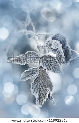 a frozen leaf and bokeh - stock photo