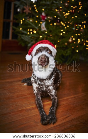 a funny dog wearing a Santa hat and beard - stock photo