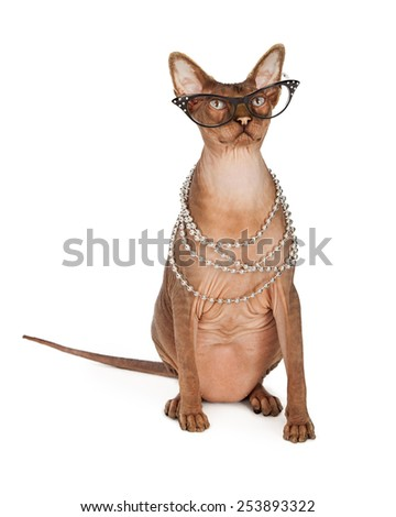 A funny looking hairless Sphinx breed cat wearing vintage style glasses and a long pearl necklace - stock photo