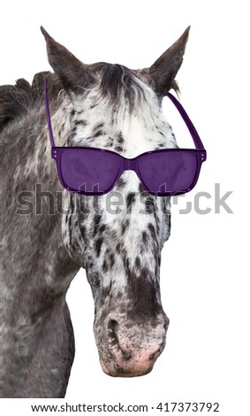 A funny spotted Knabstrupper horse with sunglasses is looking into the camera. On white background.