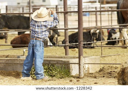 A future rodeo rider studies the competition. - stock photo