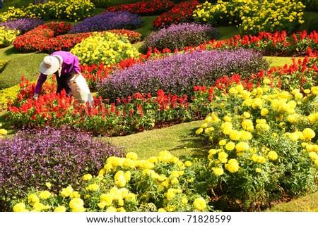 A gardener is working in the garden, Thailand - stock photo