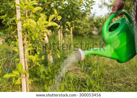 A gardener waters the plants from a watering can. Watering plants concept of farming and gardening. - stock photo