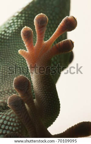 A gecko paw clinged on a glass window - stock photo