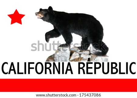 A Genuine Stuffed North American Black Bear AKA Ursus Americanus standing on rocks featuring the official flag of California. - stock photo