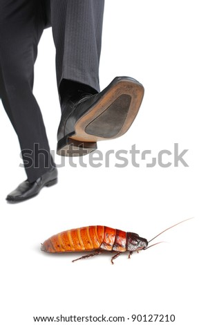 A giant foot about to step on a cockroach isolated on white background - stock photo