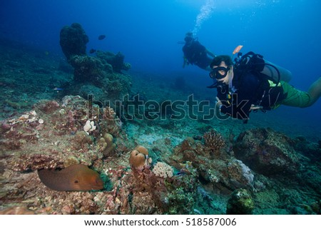 A giant moray eel and scuba divers at the coral reef