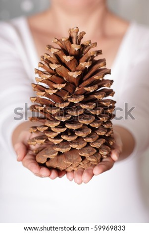 A giant pine cone holded in hands - stock photo