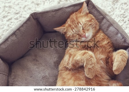 A ginger cat sleeps in his soft cozy bed on a floor carpet - stock photo