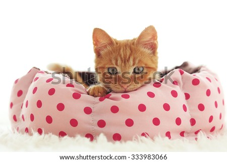 A ginger kitten lying in his soft cozy bed on a white carpet, soft focus, isolated photo. - stock photo