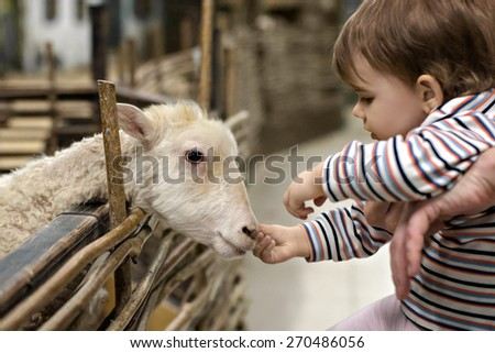 A girl and a sheep - stock photo
