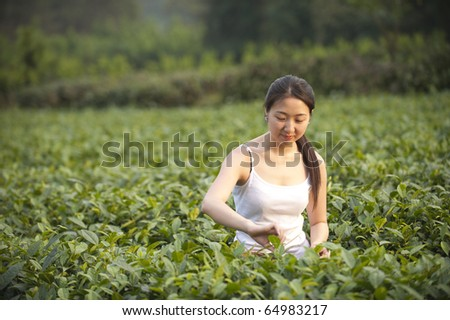 a girl is picking tea leaves in the tea plantation.